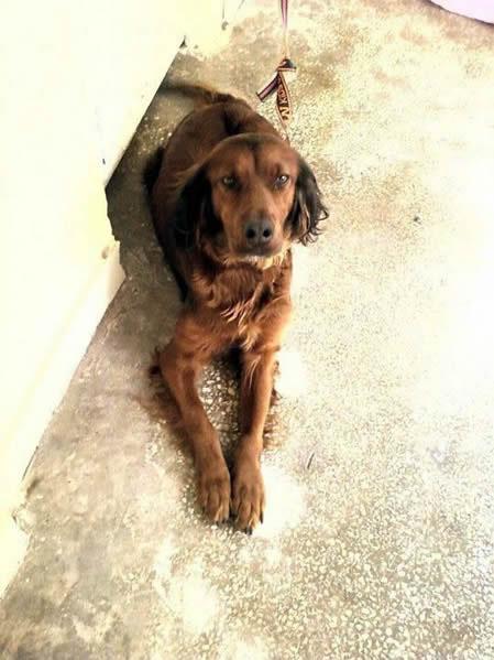 Antalya'da Kaybolan Köpek Sahibini Arıyor