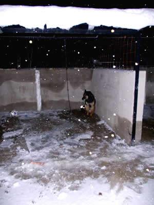 Bolu Barınağı'nda Kar&Köpek