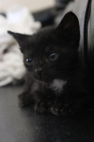 Yuva Arayan Kediler- Kara Kedi Esmer