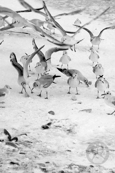 Karda Kışta Martılar
