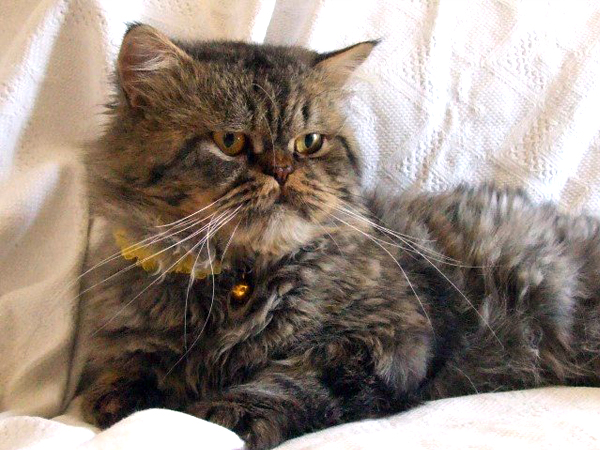 Kayıp Kedi Beykoz