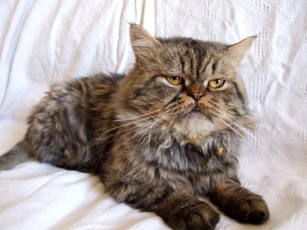 Kayıp Kedi Soğuksu