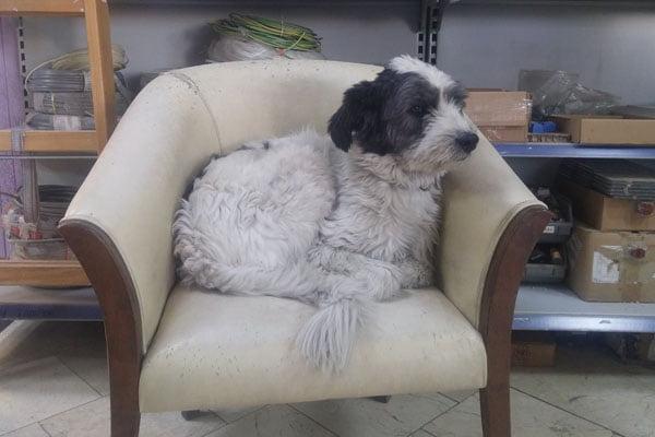 Kayıp Köpek Ostim