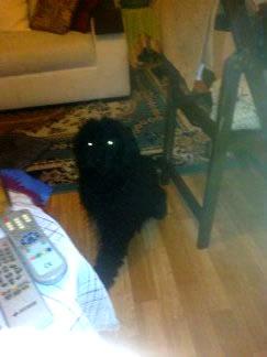 Kayıp Terrier, Sirkeci