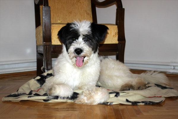 Kayıp - Terrier Ostim