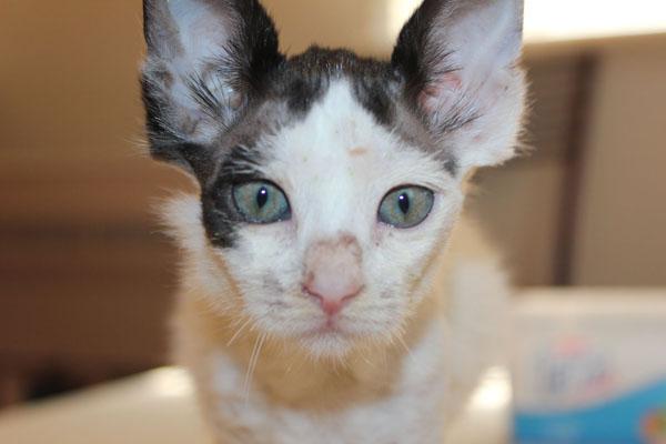Kedi Avatar Yuva Arıyor
