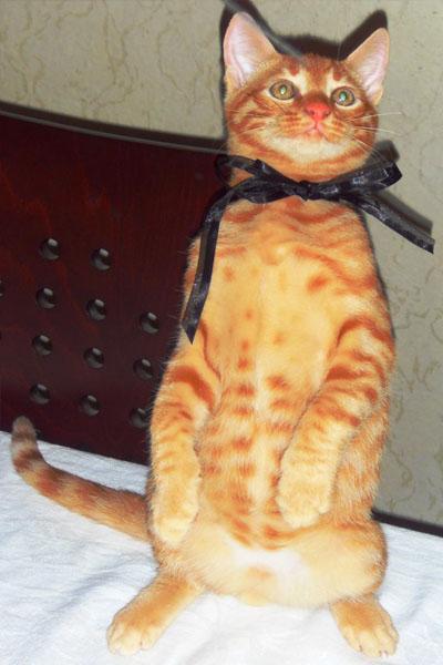 Kedi Fehmi Yuva Arıyor