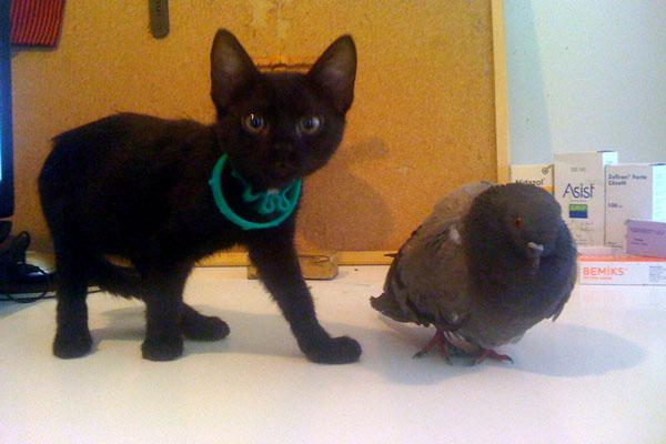 Kedi & Güvercin