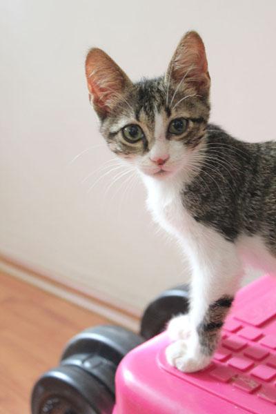 Yuva Arayan Kediler- Kirlos