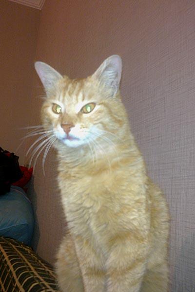 Kayıp Kedi, Çayyolu-Ankara