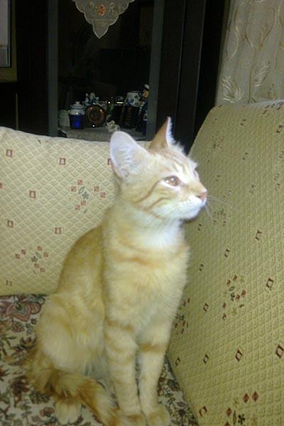 Minasera Civarı Kayıp Kedi, Çayyolu