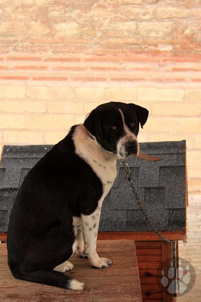 Yedikule Hayvan Barınağı'nda Bir Köpek