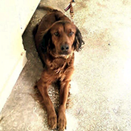 Kayıp Köpek-Antalya
