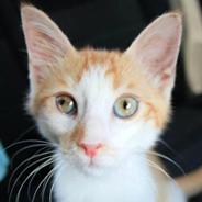 Boris Kedi Yuva Arıyor