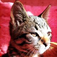 Fıstık Kedi Yuva Arıyor