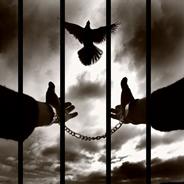 Hayvana Şiddete Hapis Cezası