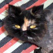 Kayıp Kedi – Gürsu Mahallesi