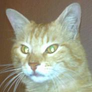 Kayıp Kedi – Çayyolu