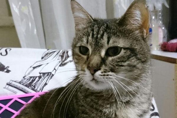 Kayıp - Kedi İnönü Mahallesi, Batıkent