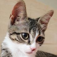 Kirlos Kedi Yuva Arıyor