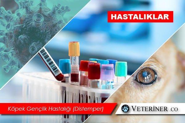 Köpek Gençlik Hastalığı (Distemper)