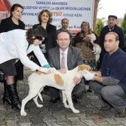 Çiğli'de Ücretsiz Kuduz Aşısı