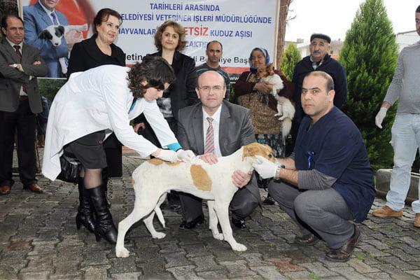 Ücretsiz Kuduz Aşısı, İzmir
