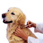 Yenimahalle'de Ücretsiz Kuduz Aşısı
