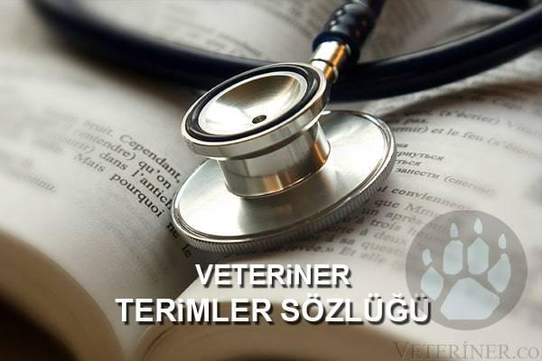 Veterimer Terimleri