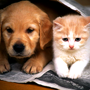 Yuva Arayan Kedi ve Köpek